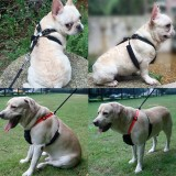 Pet Dog Non pulling  mesh  harness
